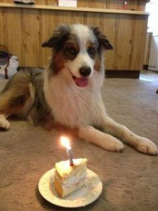 Sparky turns three!